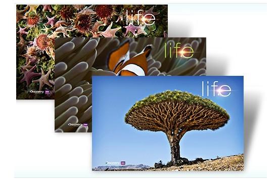 Themepack, Bildschirmhintergründe LIFE